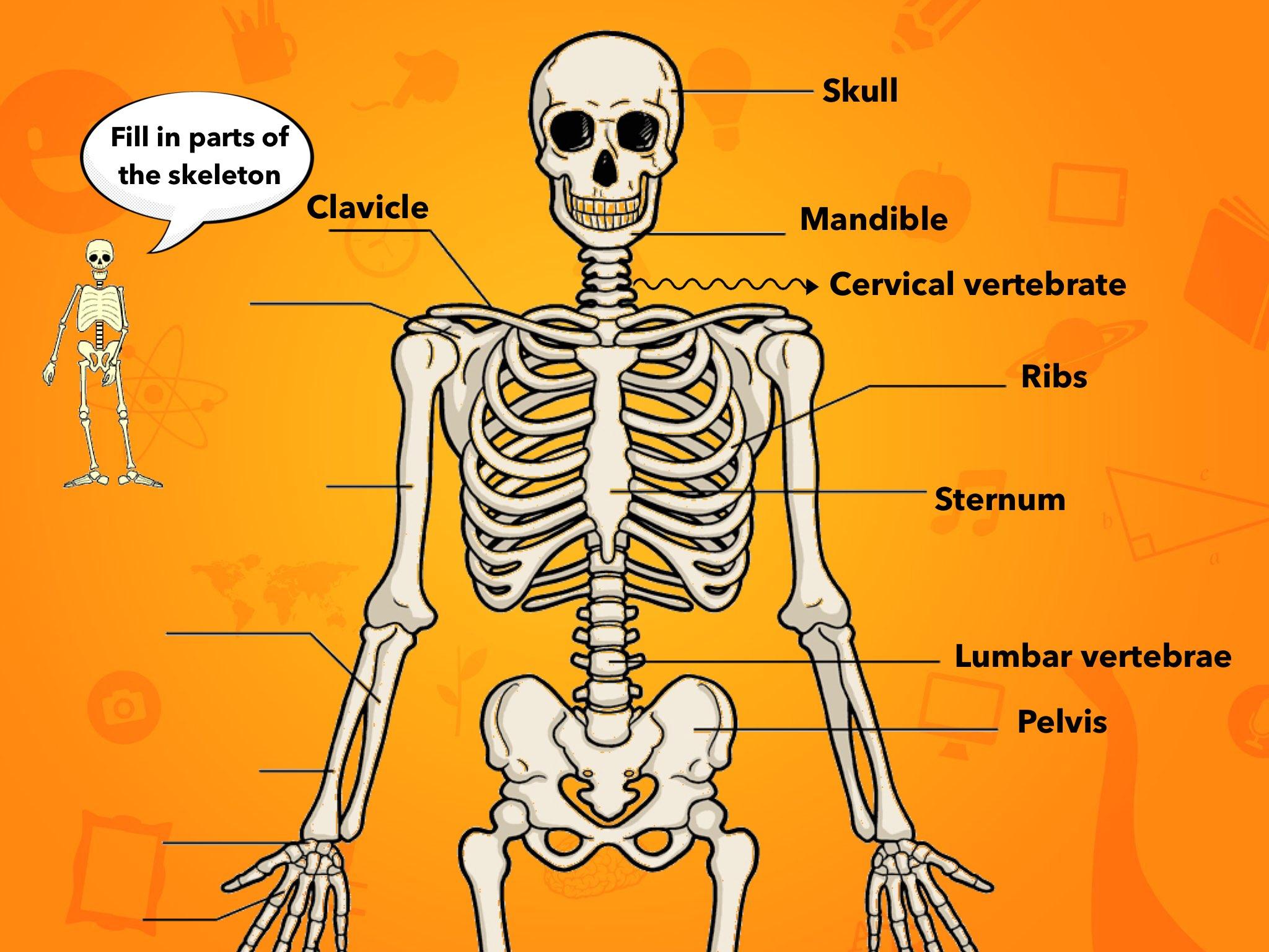 Play The Human Skeleton By Vivian Janik On Tinytap