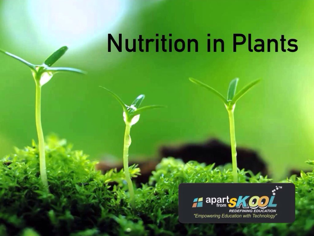 Play Nutrition In Plants By Apart From Skool On Tinytap