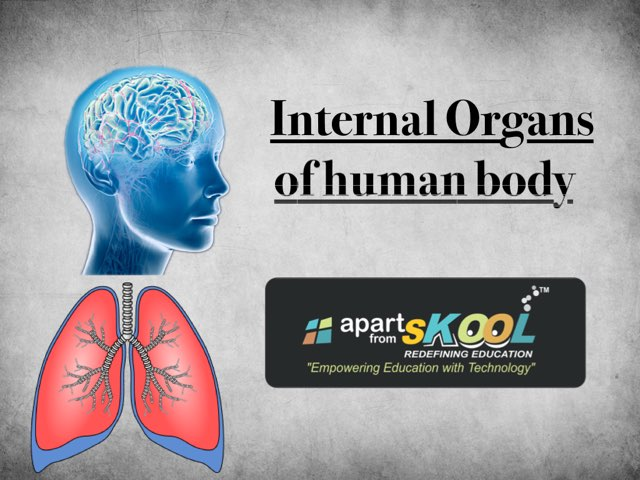 Play Internal Organs By Apart From Skool On Tinytap