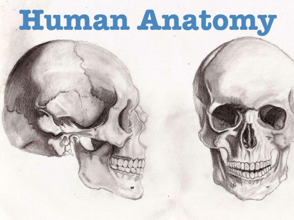 Play Human Anatomy by Urik Lazar Shalem - on TinyTap